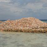 Conch-Müllhalde