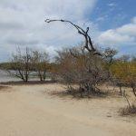 Brackwasser--Lagune