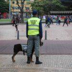 Normales Straßenbild - Hundeführer an jeder Ecke