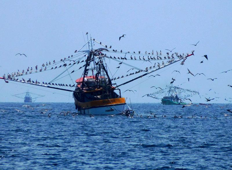 Fischer-Flotte vor den Las Perlas Islands