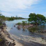 Mangroven schützen das Ufer