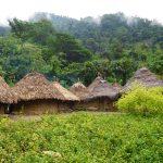 Kogi Dorf mit Coca Büschen im Vordergrund