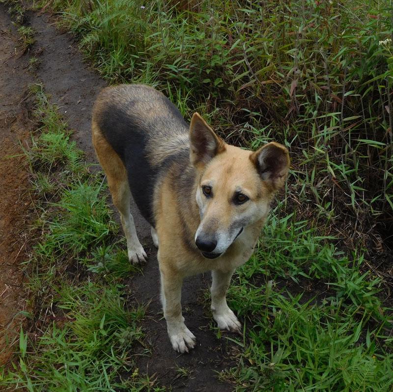 Maya - treuer Leihhund für zwei Tage