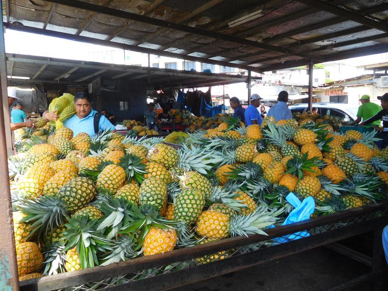 Ananas - riesig große Früchte zuckersüß