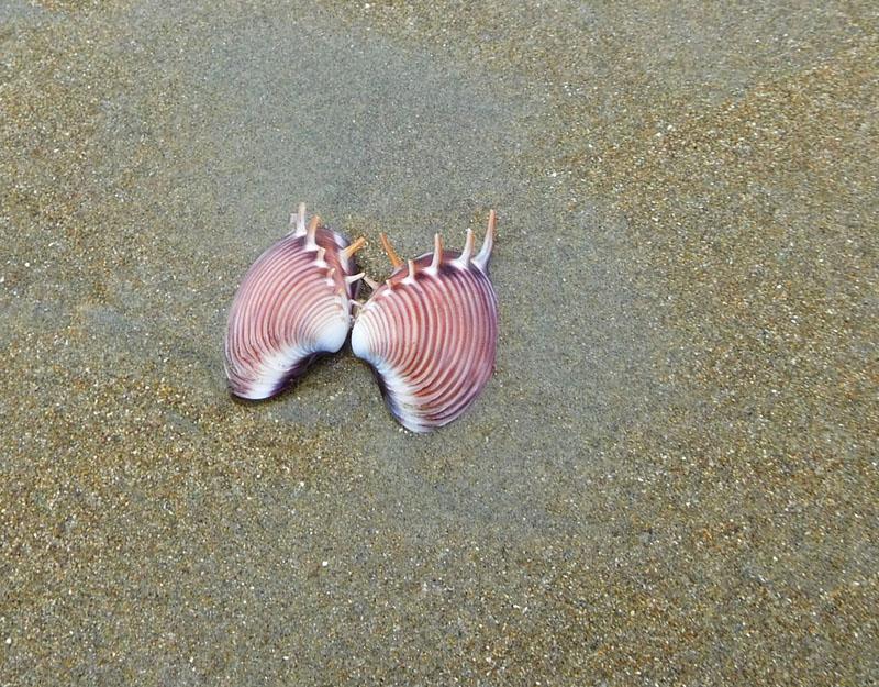 Schönheiten liegen am Strand