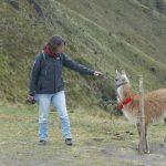 Das Touristen Guanaco an der Bergstation