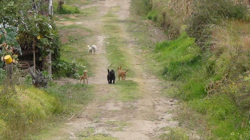 Egal an welchem Hof wir vorbei kommen - die Hunde warten bereits