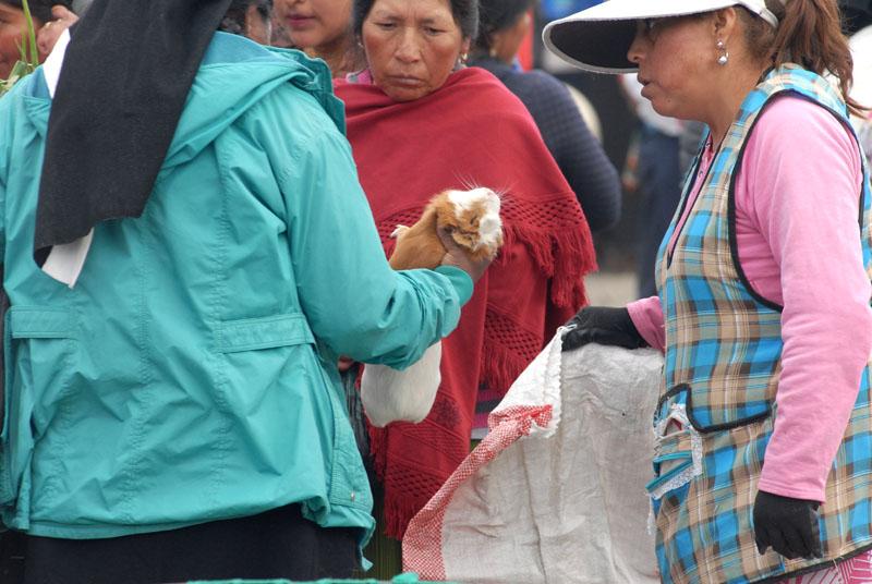 Meehrschweinchen sind Essen, keine Haustiere