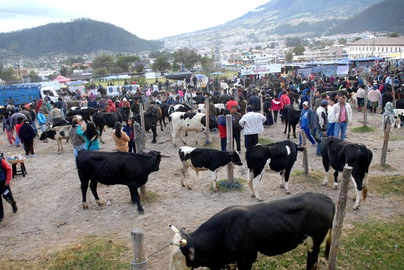 Otavalo Viehmarkt, angeblich der größte Markt Ecuadors