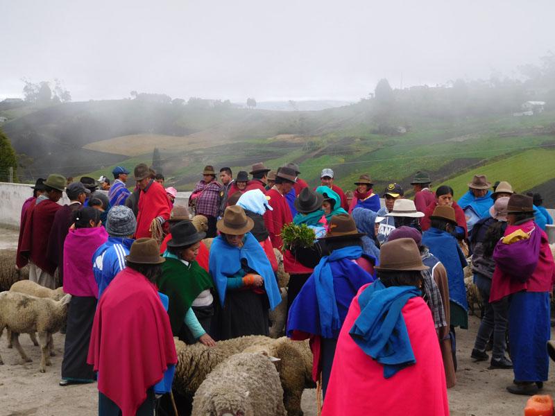 Schafe, Schweine und Kühe werden getrennt gehandelt