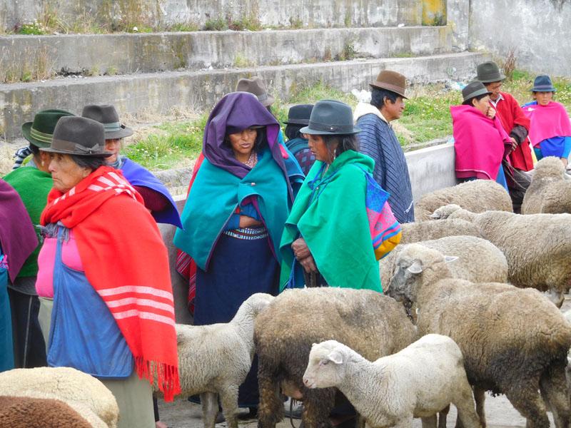 Schafhandel ist Frauensache