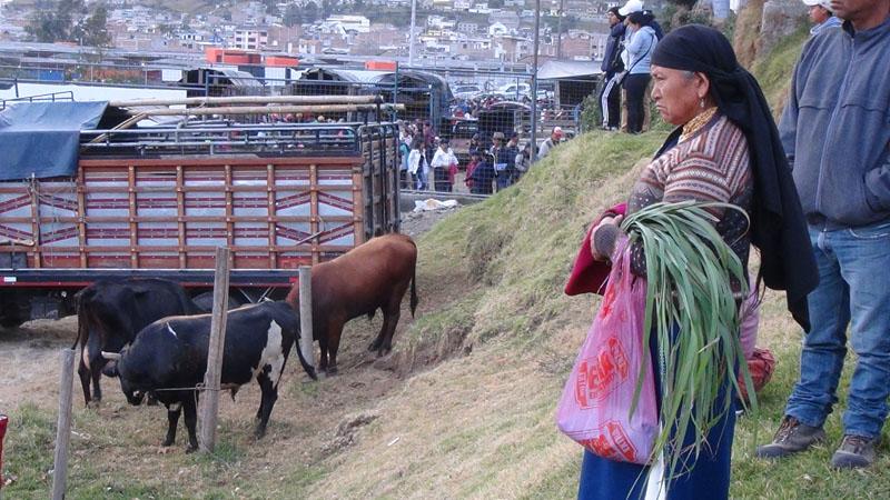 Uriger Viehmarkt in Otavalo