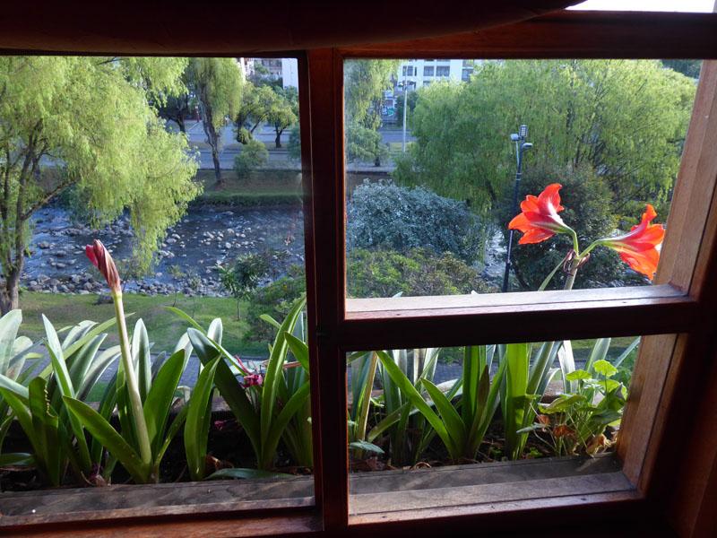 Amaryllis auf der falschen Seite der Fensterbank in unserem Hostal