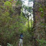 quer durch Trockenregenwald