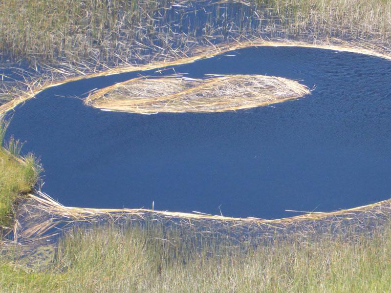 Schilfinseln im Kratersee Rano Kau