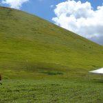 Der Abhang - 45 Grad Neigung - kniehoher Bewuchs mit rauem Gras