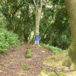 Dreistündige Wanderung auf tollen Waldwegen